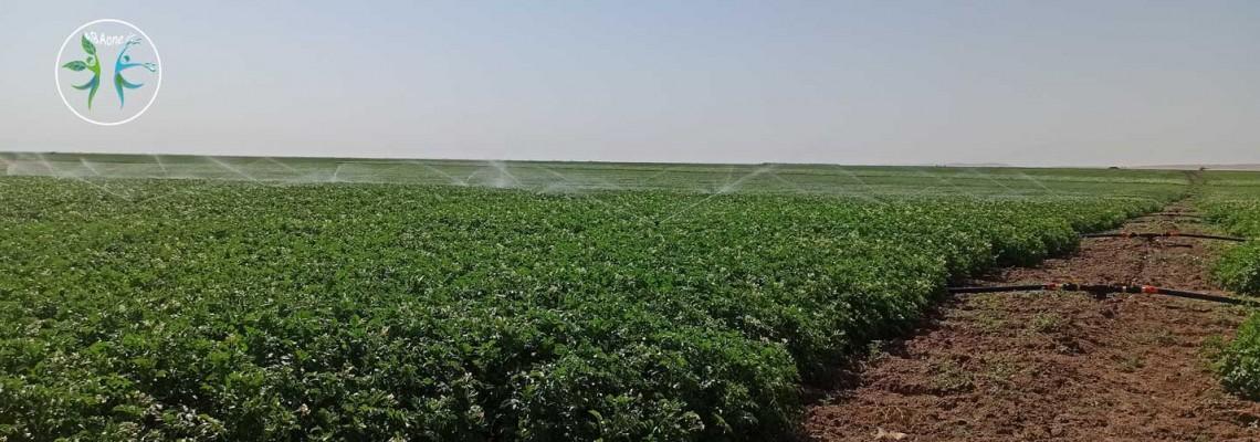 رییس جهاد کشاورزی خراسان شمالی: راندمان آبیاری در خراسان شمالی ۱۲ درصد افزایش یافت