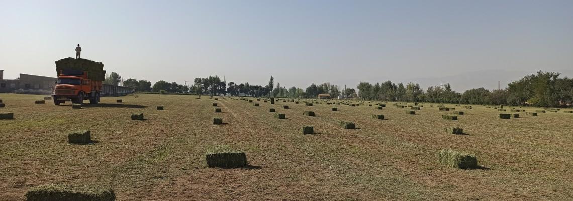 افزایش بهرهوری اولین محصول اجرای سامانههای نوین آبیاری در استان گلستان است